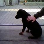 Jack- 3 Months Old