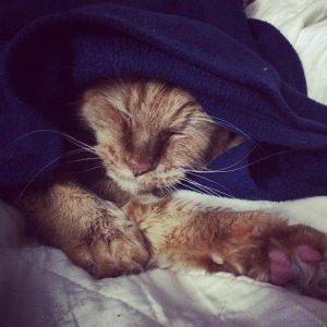 bella_blanket